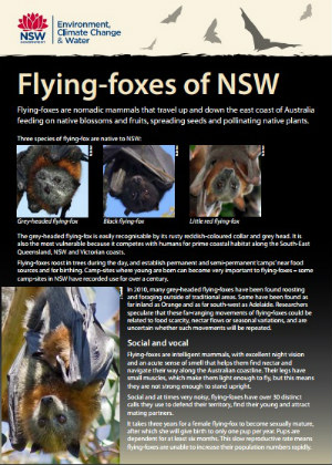 Flying-foxes of NSW publication cover