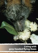 Living with grey-headed flying-foxes publication cover