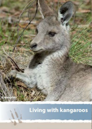 Living with Kangaroos publication cover