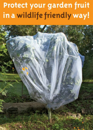 Protect your garden fruit in a wildlife friendly way publication cover