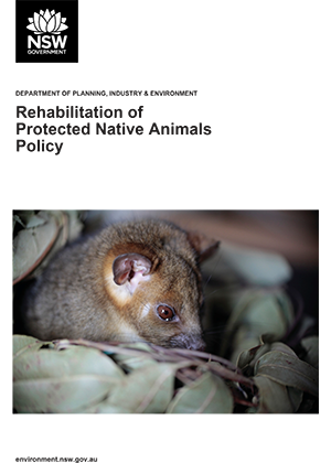 Rehabilitation of protected native animals policy