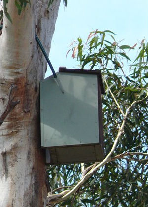 Sugar glider nest box in tree