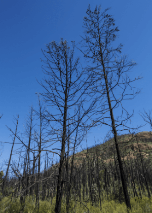Living with fire in NSW National Parks Executive Summary
