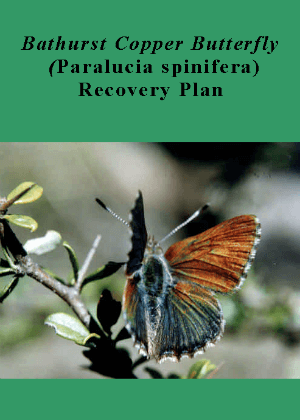 Bathurst Copper Butterfly  (Paralucia spinifera) Recovery Plan cover.