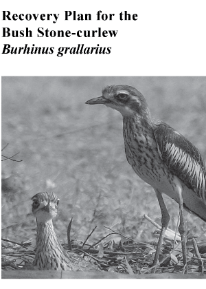 Recovery Plan for the Bush Stone-curlew (Burhinus grallarius) cover.