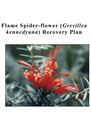 Flame Spider-flower (Grevillea kennedyana) Recovery Plan cover.