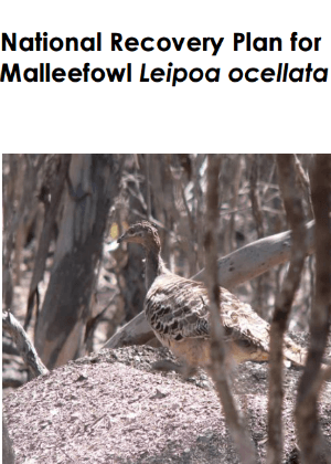 National Recovery Plan for Malleefowl (Leipoa ocellata) cover.