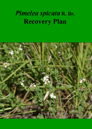 Pimelea spicata R. Br. Recovery Plan cover.