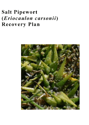 Salt Pipewort (Eriocaulon carsonii) Recovery Plan cover.