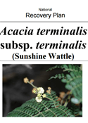 Sunshine wattle (Acacaia terminalis subsp. terminalis) recovery plan cover.
