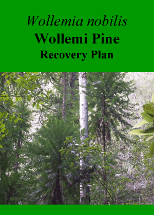 Wollemia nobilis Wollemi Pine Recovery Plan cover.