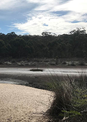 Lake Couridjah, Thirlmere Lakes, showing a dry lake bed, sandy bank with rushes growing, and one puddle of water with bush behind.
