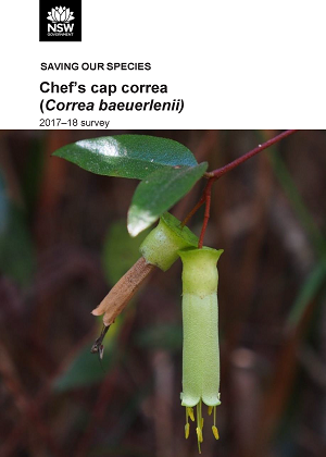 Cover of Chef's cap correa (Correa baeuerlenii): 2017-18 survey