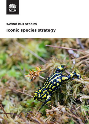 Iconic species strategy