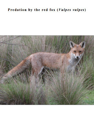 Red fox threat abatement plan cover