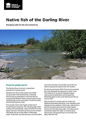 Cover image for Factsheet - Native fish of the Darling River