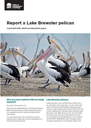 Cover for Lake Brewster pelican factsheet