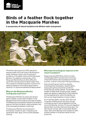 Royal spoonbills Macquarie Marshes fact sheet cover image