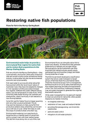 Restoring native fish populations | NSW Environment & Heritage