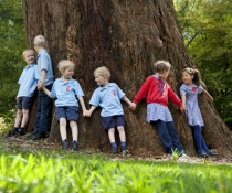 Primary school children holding hands around the base of a large tree