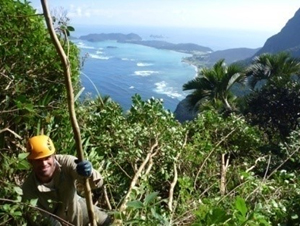 Weed removal on Lord Howe Island