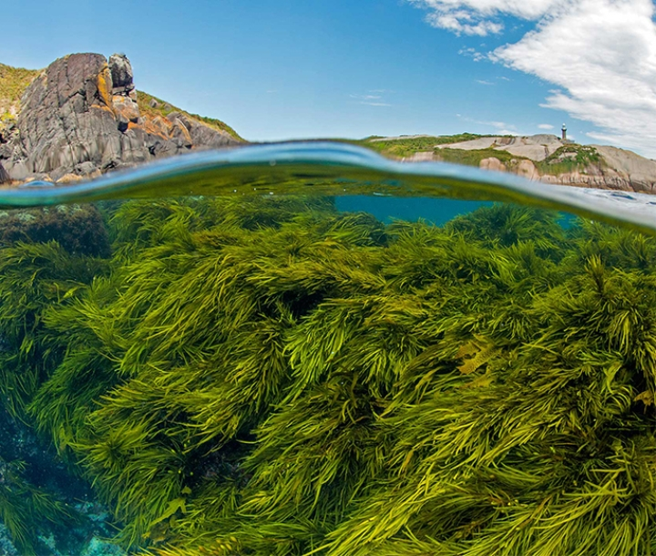 Underwater view of marine seabed with seagrasses