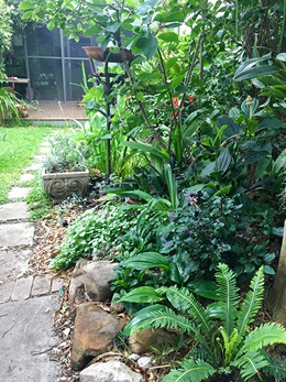 Stepping stone path lined by green plants in garden leading to back verandah of house.