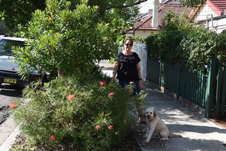 Clare Nadas standing next to her verge garden with her dog. The garden has a pink grevillea at the front.