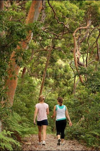 Two people walking away from camera on path surrounded by large trees and greenery.
