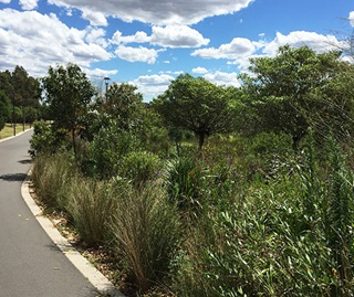 Bitumen bike path on left with native grasses, shrubs and trees on right.