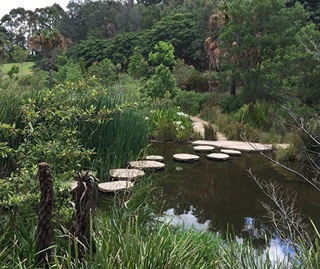 Stepping stones across water with reeds in foregournd and  bushes on left and on other side of water.