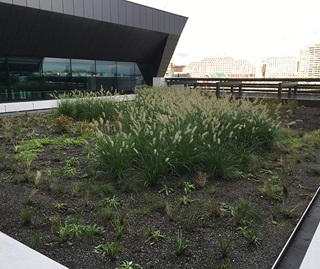 Roof top garden in foreground with native grass growing in centre of a square patch of earth surrounded by concrete path, railing with building in background.