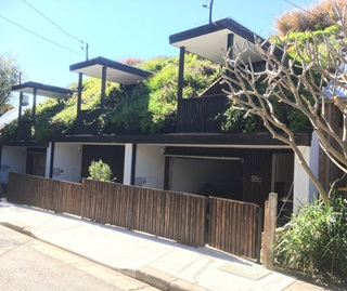 Green roofs with grasses growing on three terrace houses in Newtown, Sydney.