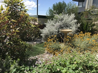 Birdbath surrounded by a garden of groundcover with yellow flowers, shrubs and trees.