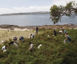 Volunteers at bush regeneration program, Bradleys Head, Sydney Harbour National Park.