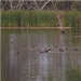 Gwydir wetlands system video thumbnail