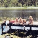 Six children sitting and lying in the sun on the end of a jetty that extends over water in Lake Couridjah with reeds and lily pads floating on it. Reeds and bushland around the edge of the lake  in the background.