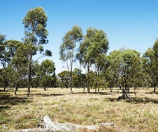 Biodiversity, native vegetation, Albury New South Wales