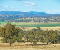 Biodiversity, country landscape between Dubbo and Newcastle