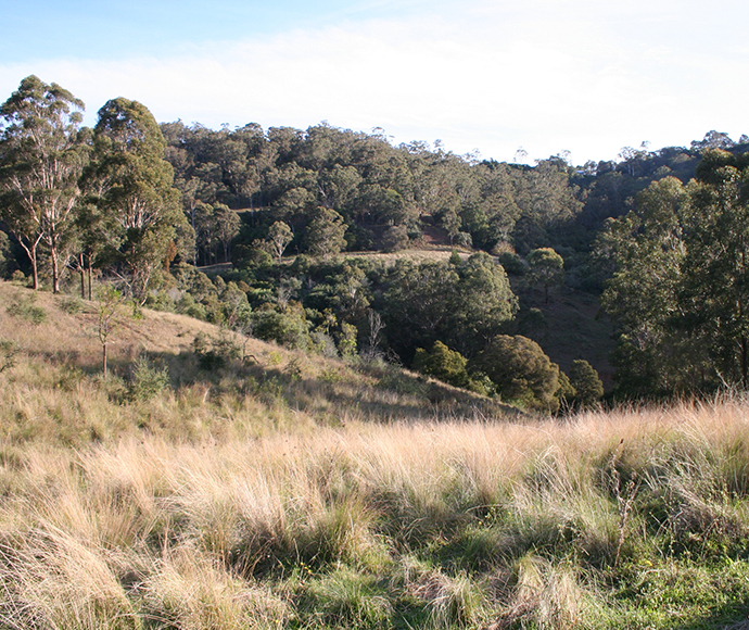 Cumberland Plain Woodland on the Mt Hercules Biobank Site at Razorback a permanently protected site