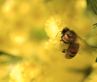 NSW national parks beekeeping policy | NSW Environment