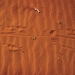 Kangaroo tracks in red dirt