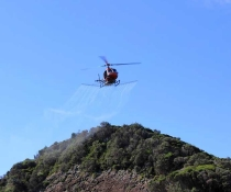 Helicopter spraying to eradicate bitou bush, Seal Rocks