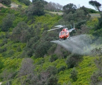 Boom spraying of bitou bush