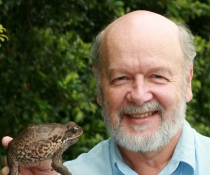 Professor Rick Shine and cane toad