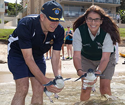 Taronga Zoo releasing treated penguins with help from HMAS Penguin