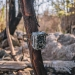 Motion-sensing camera set up in the brush-tailed rock-wallaby (Petrogale pencillata) habitat, Kangaroo Valley, after the 2019-20 fires