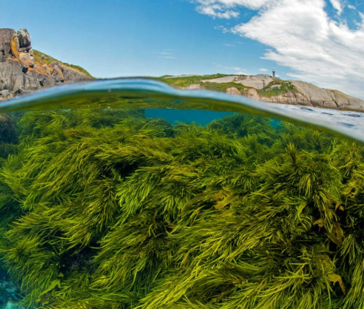 Green Globe Award Finalist, Sydney Institute of Marine Science and UNSW, Operation Crayweed