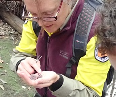 Meg Hinds investigating Hygrocybe reesiae