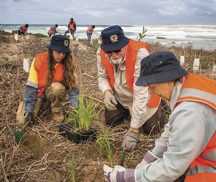 Volunteers planting near the beach at Tomaree National Park